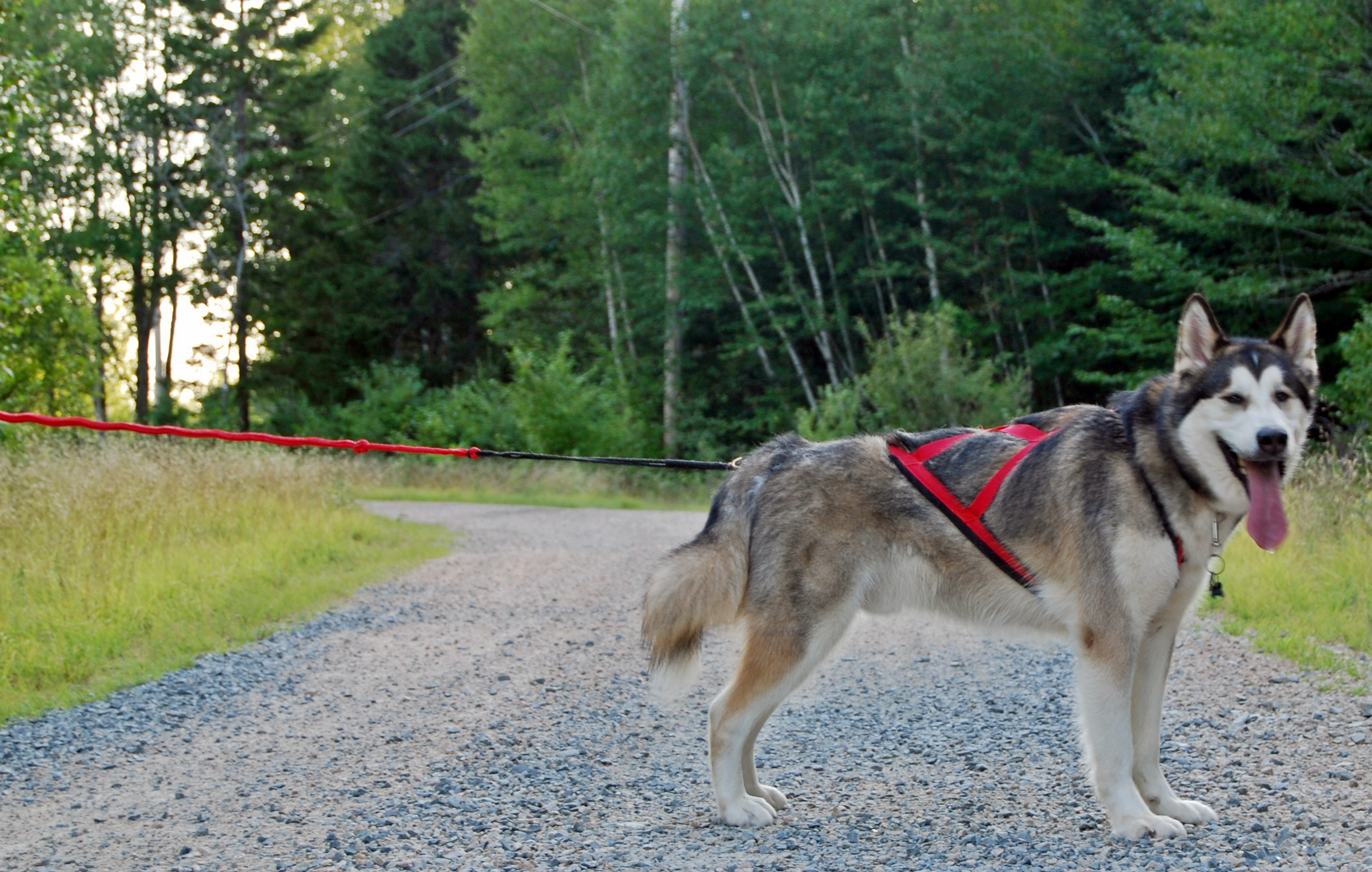 mushtechharness product review x back harness dogs in gear